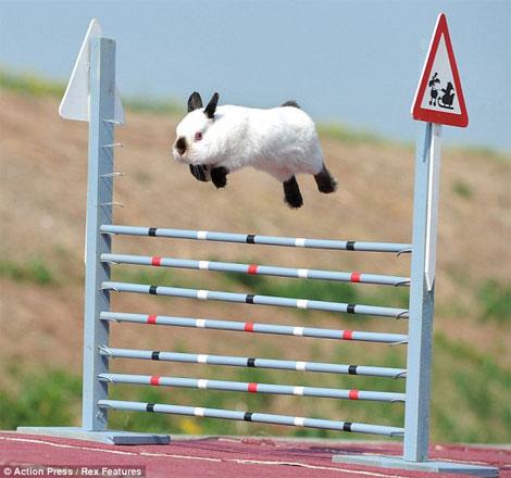 bunny racing, bunny hop